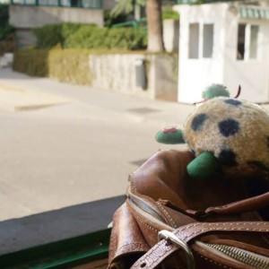 """¿Quieres conocer a todas las tortugas de nuestro concurso """"Las tortugas son para el verano""""?"""